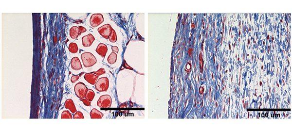 Image of biomaterials