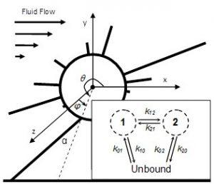 Biomechanics image