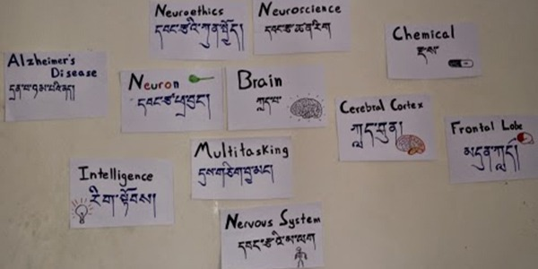 Posters with neuroscience-related vocabulary and Tibetan translations