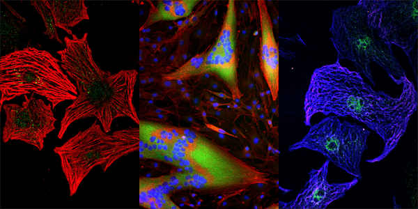 Images of cell scaffolds