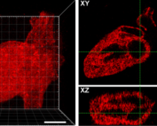Cole DeForest patterned heart images