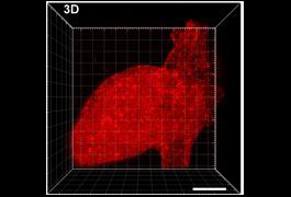 Cole DeForest patterned platform heart