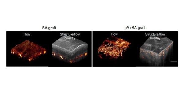 UW Bioengineering Zheng research image from Nature