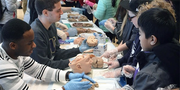 UW students lead elementary school students in Brain Awareness Week activities