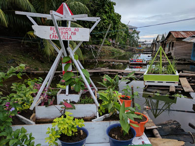floating gardens in Iquitos, Peru