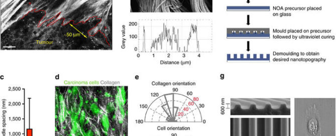 Nanopatterned substrates mimic aligned collagen architectures in breast and pancreas cancer