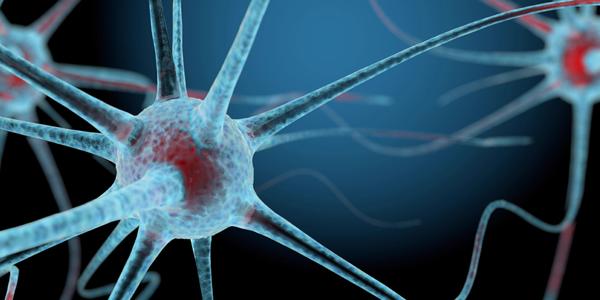 neuron closeup illustration