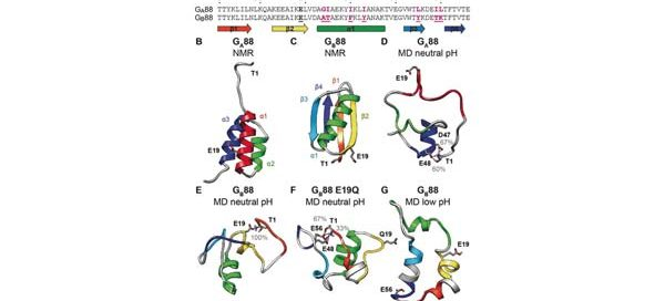 Amino?acid sequence and structural comparison of GA88 and GB88.