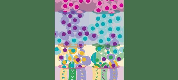 SplitSeq RNA sequencing